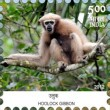 Postage Stamp on Endemic Species Of Indian Biodiversity Hotspots Hoolock Gibbon