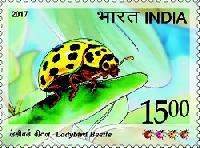 Postage Stamp on Ladybird Beetle