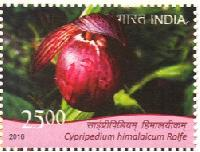 Postage Stamp on Orchids