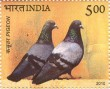 Postage Stamp on Pigeon